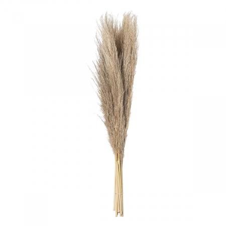 Taupe Pampas Grass Stem